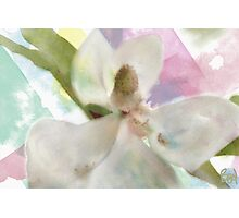 Magnolia White / another version  Photographic Print
