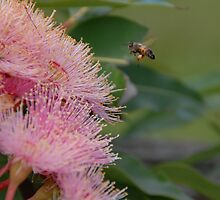 Bee by tully