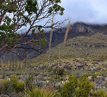 Rolling Fog in McKittrick Canyon by Leona Bessey