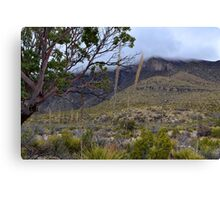 Rolling Fog in McKittrick Canyon Canvas Print
