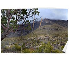 Rolling Fog in McKittrick Canyon Poster