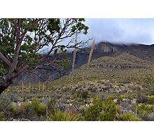 Rolling Fog in McKittrick Canyon Photographic Print