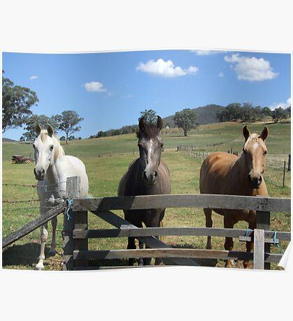 Hello Horsey! Poster
