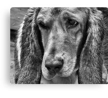 Gracie Canvas Print