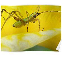 Little Green Bug Poster