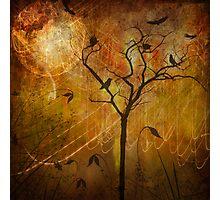 Moon Birds Photographic Print