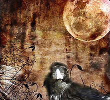 The Bird and The Moon by Anne  McGinn