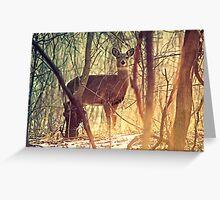 Morning Deer Greeting Card