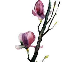 magnolia by OlgaBerlet