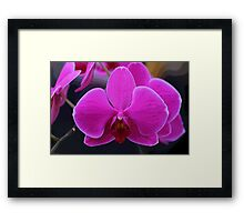 Orchid Glamour Framed Print