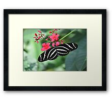 Zebra swallowtail butterfly resting on leaf color photo 1 Framed Print