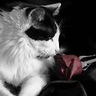 The Rose by Lori Walton