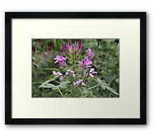 Waving Flower Framed Print