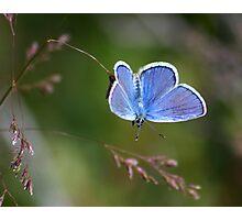 A Little Blue Photographic Print