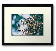 Dream Flower 13 Framed Print