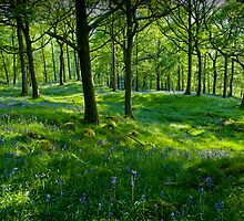 Bluebell Wood by Simon Hathaway
