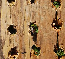 Leaf Cutter Bee Entering a Bee Condo by Catherine Sherman