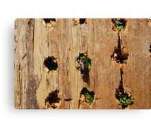 Leaf Cutter Bee Entering a Bee Condo Canvas Print