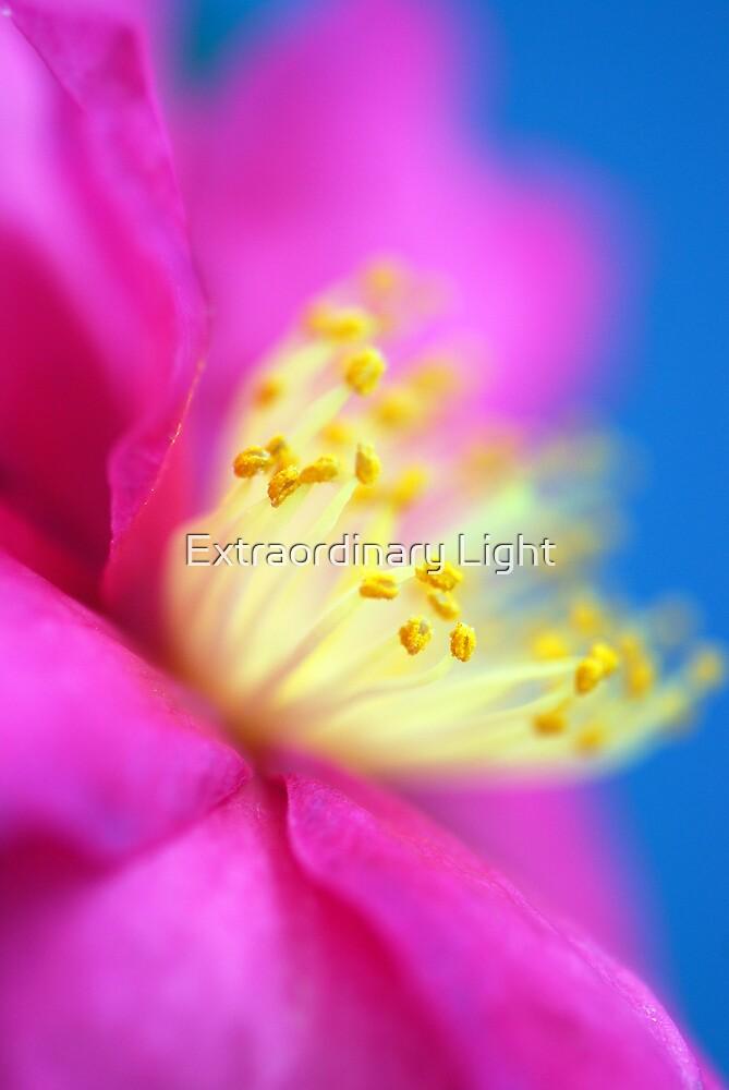 Lightness of Being by Renee Hubbard Fine Art Photography