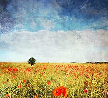 Poppy Fields - Texture by bluefinart