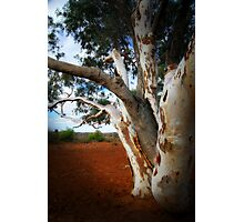 Outback Tree Photographic Print