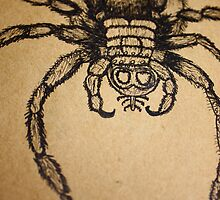 The Tarantula Would Have To Save Up For Seven Months To Afford Four Pairs Of Brogues by DavidBaddeley