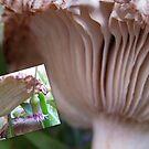 Double Mushrooms by Caroline Angell