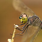 Dragonfly by Amran Noordin