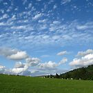 Sheep May Safely Graze by Mike Paget