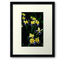Night of the Iris... Framed Print