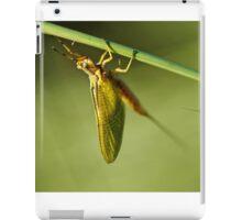 Ephemeroptera Mayfly Macro iPad Case/Skin
