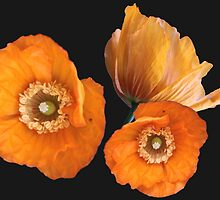 wild yellow poppy flowers. floral photo art. by naturematters