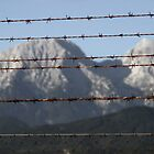 Over the fence by Beauty Vault Photo