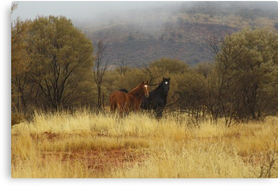 2 Brumbies by Clare101