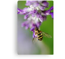 Little Hoverfly Canvas Print