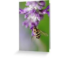 Little Hoverfly Greeting Card
