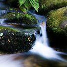 River Flow by Luís Lajas