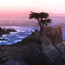 Lone Cypress by Jean-Pierre Mouzon
