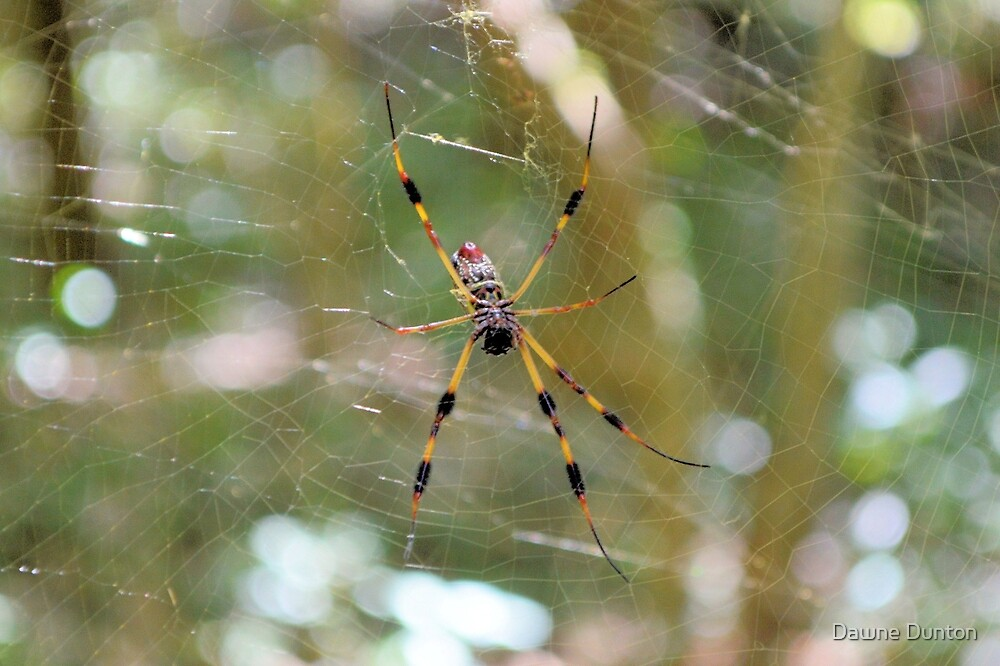 Golden Silk Orb Weaver 2 by ©Dawne M. Dunton