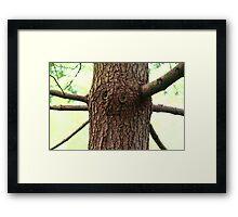Oz Tree Framed Print