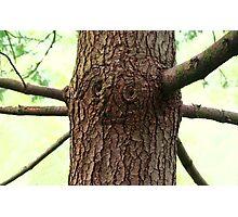 Oz Tree Photographic Print