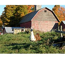 That's my barn right there behind me Photographic Print