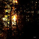 sun through the trees by Cheryl Dunning