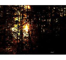 sun through the trees Photographic Print