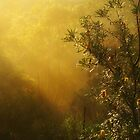 &quot;Banksia in the Mist&quot; by debsphotos