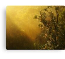 """Banksia in the Mist"" Canvas Print"