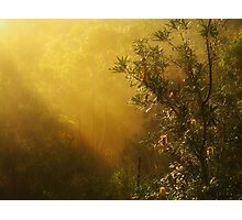"""""""Banksia in the Mist"""" Photographic Print"""