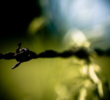 Old Barb Wire by Erin  Sadler