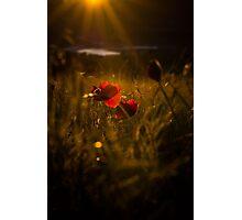 Sunset Poppey! Photographic Print