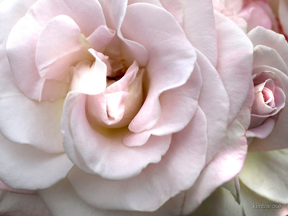 Blossom and Bud by kimbarose